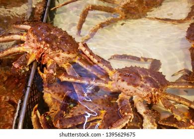 Taraba King Crab in the water at morning market in Hokkaido,Japan