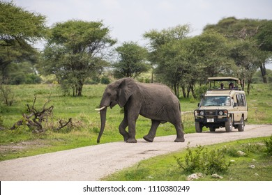 Tarangire National Park, Arusha / Tanzania - 17 December 2017: Elephant crossing road in front of safari jeep with tourists