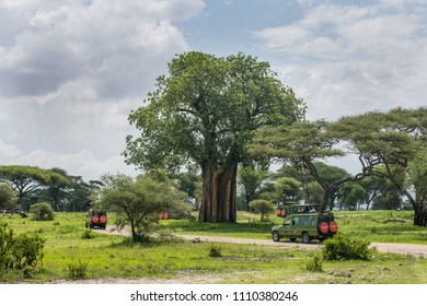 Tarangire National Reserve, Arusha /  Tanzania - 17 December 2017: Safari trucks going round the baobab tree while searching for animals in the park