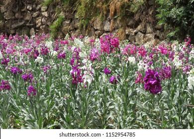 """""""Tarma, Junín/Perú"""" Flores peruanas. La flor de color amarilla se llama retama y la imagen de flores blancas y purpuras son alhelíes"""