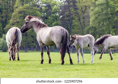 The Tarpan Horse