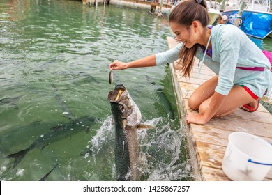 Tarpon feeding in the Keys in Florida. Asian tourist girl having fun on vacation travel feeding big tarpons fish jumping out of water - leisure vacation activity in the Florida Keys.