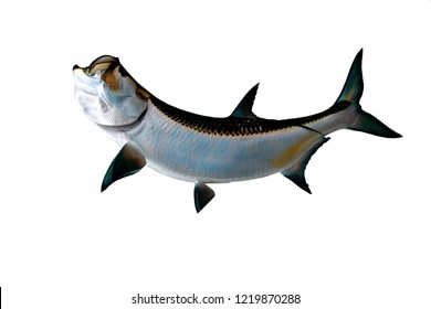 Tarpon fish mount with isolated background