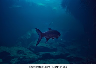 tarpon underwater, large sea fish, tarpon in the wild, fishing underwater photo