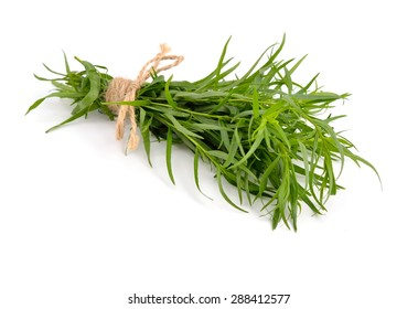 Tarragon (Artemisia dracunculus) Isolated on white background.