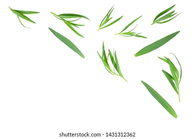 tarragon or estragon isolated on white background with copy space for your text. Artemisia dracunculus. Top view. Flat lay