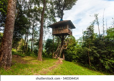 Tarzan style House in Jungle