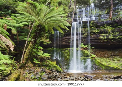 Tasmania Mt Field national park waterfall cascade in lush rainforest front view wet clear pure forest stream