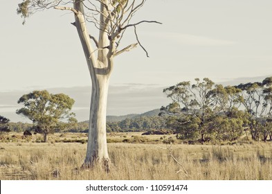 Tasmanian landscape with eucalyptus trunk in pasture - artistic rendition
