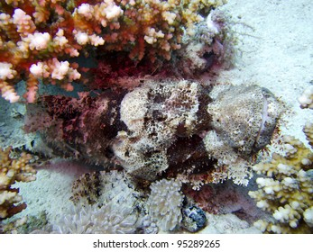 Tassled Scorpionfish (Scorpaenopsis oxycephala) on Sandy Bottom, Marsa Shouna North, Red Sea, Marsa Alam, Egypt