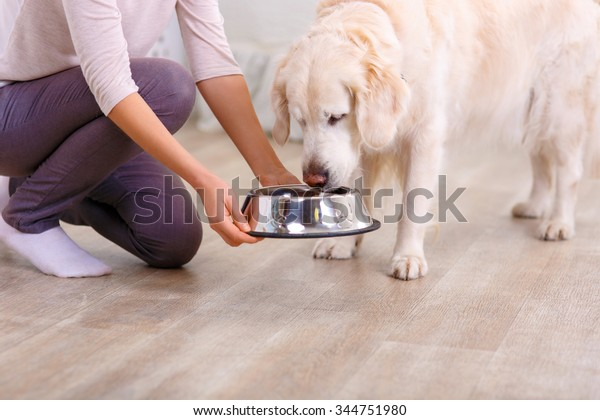 Taste it. Close up of bowl with food in hands of pleasant caring woman holding it while feeding her dog