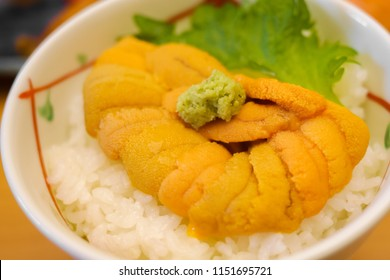 Tasty and delicious Sushi Donburi or Japanese rice bowl topped with fresh and creamy Uni(Sea Urchin) with Wasabi at a restaurant in Hokkaido. Selective Focus. Healthy Eating and Eat Well Concept.
