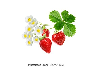 tasty fresh strawberries on white