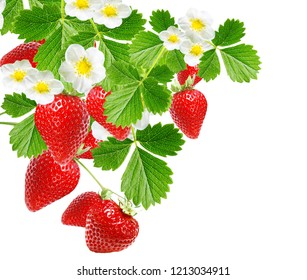 tasty freshness strawberries