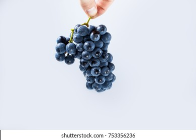Tasty grapes in hand. Isolated. On white background.