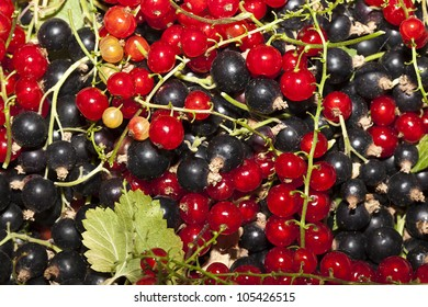 tasty and juicy red and black currants