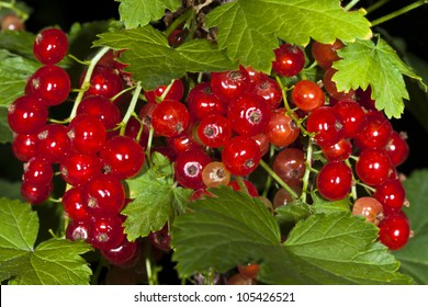 tasty and juicy red and  currants
