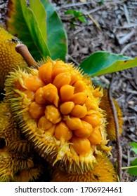 tasty & yummy wild jackfruit image