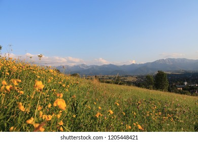 Tatra mountains in poland with yellow flovers in the evening