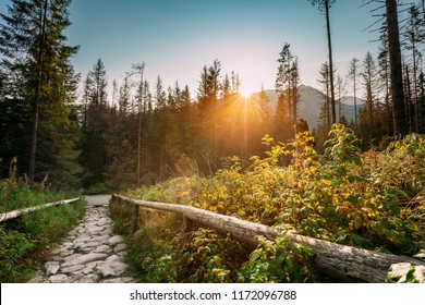 Tatra National Park, Poland. Sunrise Above Hiking Trails In Summer Tatra Mountains Landscape. Morning Sun Sunshine With Sunlight Through Trees In Tatras. Beautiful Scenic View. European Nature.