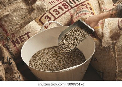 Tattooed roaster hand holds metal scoop with raw fresh green coffee beans above plastic basket and imported canvas bags from plantations in warehouse
