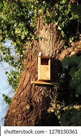 Tawny owl nesting box on a tree in the UK