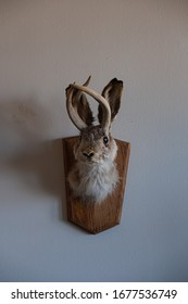A taxidermy of a Jackalope hangs on a wall.