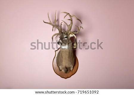 Taxidermy Mounted Stag Head Antlers On Stock Photo (Edit Now