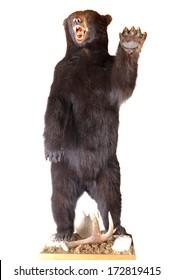 Taxidermy of a North American Black bear
