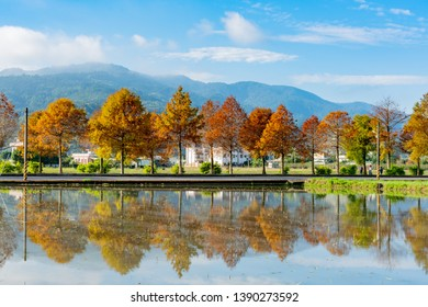 Taxodium distichum in fall color with red, orange leaves and reflection at Yilan, Taiwan