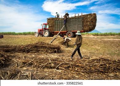 TAY NINH, VIETNAM. NOVEMBER 30, 2013. A view of people loading sugar cane on truck in tay ninh, vietnam.