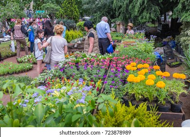 TBILISI, GEORGIA, EASTERN EUROPE - MAY 26TH, 2015 : Local people enjoying a garden display during the Georgian National Independence Day celebrations on Rustaveli Avenue.