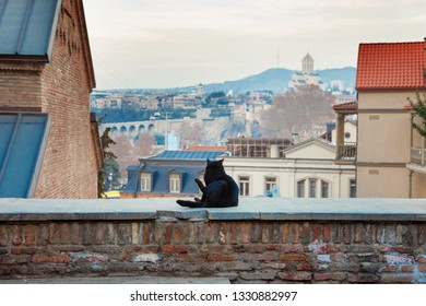 Tbilisi Historic Old Town with cat on parapet Geargia capital Tiflis Houses Panorama View