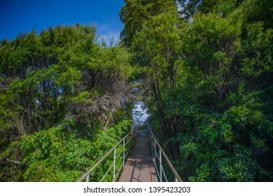 Te Anau, New Zealand, Feb 12th, 2019: the forest in front of Te Anau Glowworm Caves