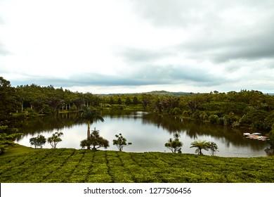 Tea Bois CHeri plantation, mauritius, nouvelle france
