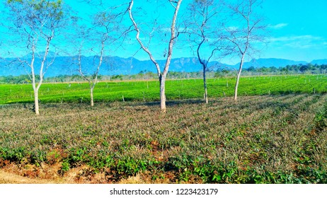 Tea Estate of Assam. This is Ananda Bagan Tea  Estate situated in the Lakhimpur district of Assam along the Asaam-Arunachal Pradesh inter state border. It is the one of oldest tea-estate of Assam
