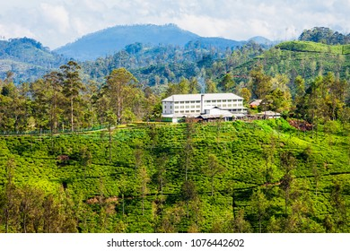 Tea factory and tea plantation in Ella, Sri Lanka. Ella is one of most important places for tea production in Sri Lanka.