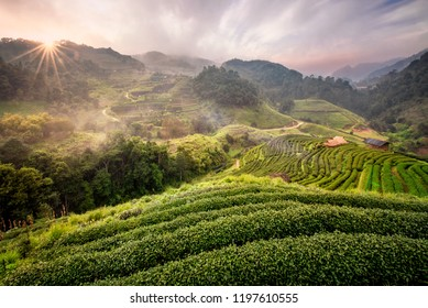 Tea farm  with sea of mist, green tree, blue mountain and sunlight beam in the morning at Doi Ang Khang, Chiangmai, Thailand.