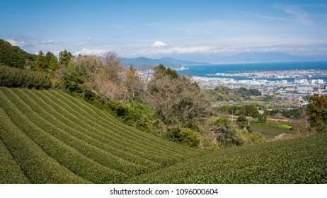 Tea field and Fuji mountain and Shizuoka city view taken from Nihondaira