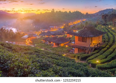 The  tea fields with fog in the moring. Ban Rak Thai Village, Mae Hong Son, Thailand.