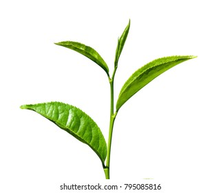 Tea leaf image