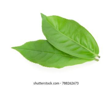 tea leaf isolated