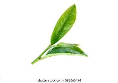 Tea leave on white