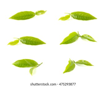 Tea leaves collection isolated on white background.