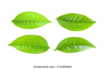Teeblätter einzeln auf weißem Hintergrund