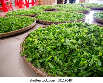 Tea leaves processing in a factory.