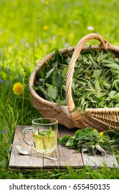 Tea from nettle. Fresh spring nettle. Suitable for salad, tea or use in cosmetics.