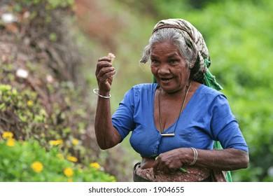 Tea picker 3
