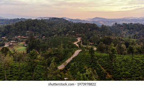 Tea plantation in up country near Nuwara Eliya, Sri Lanka  Beautiful landscape