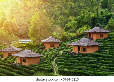 Tea Plantation and hut in Ban Rak Thai. Mae Hong Son, Thailand